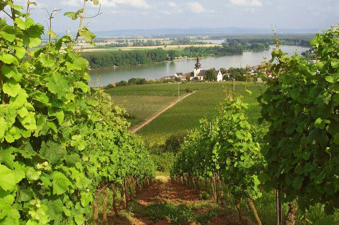 Рейнские вина