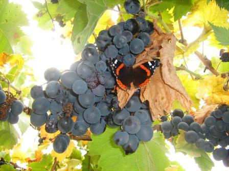 История крымских вин