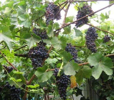 История крымских вин – советские времена