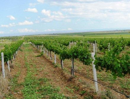 История крымских вин - постсоветские времена