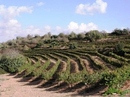История израильских вин