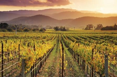 История калифорнийских вин
