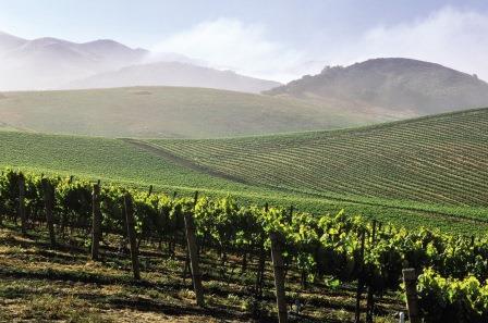 Главные отличия вин Калифорнии